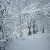 зимняя фантазия :: людмила голубцова