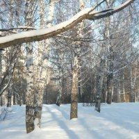 зима :: людмила голубцова