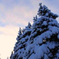 Зимняя красота :: Алла Качуро