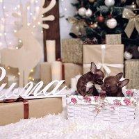 шоколадное счастье :: Катерина Терновая