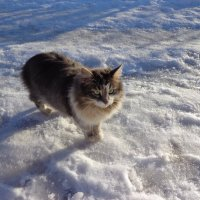 мерзну на снегу :: Наталья Сазонова