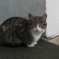 Яснополянский кот. :: Alex 711402