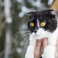 Кошка :: Ольга Милованова