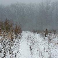 Зарисовки зимние. Февраль... :: Александр Резуненко
