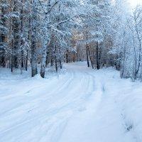морозный денёк... :: Сергей