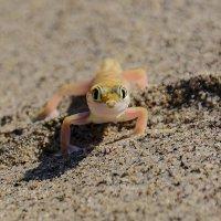 инопланетянин, редкое существо (геккон) :: Георгий А
