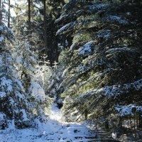 Солнышко сквозь лес :: Mariya laimite