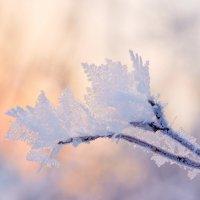 зимы рисунок :: scbi