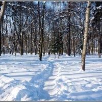 Зима, солнце, снег :: Владимир Белов