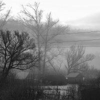 Утро. Туман :: Вера Сафонова