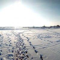 Зимний день :: Денис Матвеев
