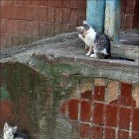 Два котёнка. :: Нина Корешкова