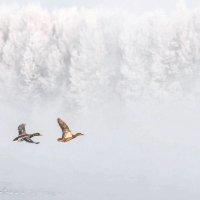 Туман :: anton nenakhov