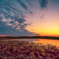 Закат над озером лотосов :: Андрей Володин