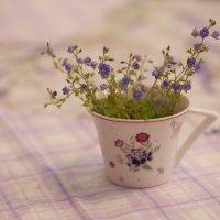 Запахло весной :: Андрей Акимов