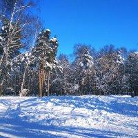 Зимний парк :: ВиктОр ИванОвич
