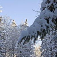 Сказки зимнего леса :: Татьяна Петранова