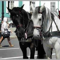 Лошади на Дворцовой :: Вера