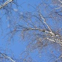 Морозное утро в лесу :: Olga Golub