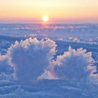 снежные цветы :: Седа Ковтун