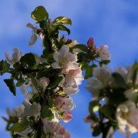 Цвели сады в преддверье мая.. :: Татьянка *