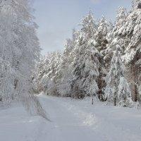 февральская дорога :: оксана