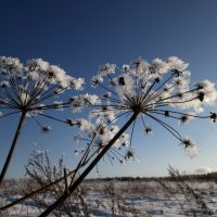 Зимнее цветочное чудо. :: Татьяна Корнеева