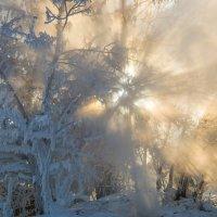 Мороз и солнце. :: Rafael