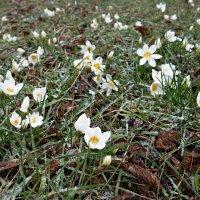 Февраль...Сказочная полянка... :: Galina Dzubina