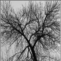 Зимние деревья. :: Михаил Розенберг