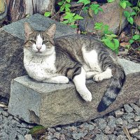 Есть два способа забыть о невзгодах жизни: музыка и кошки. :: Натали Пам