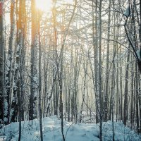 Утро в лесу :: Виктор