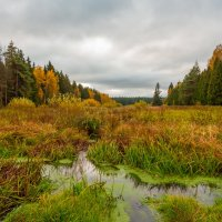 Осенний пейзаж. :: Владимир Лазарев