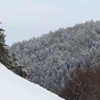 после снегопада :: Alla Swan