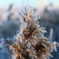 Зима :: Александр Кубасов
