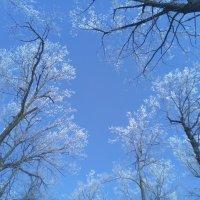 Зимнее небо :: Денис Геранькин