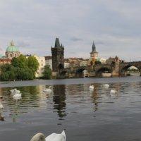 Лебедь :: Алексей Поляков