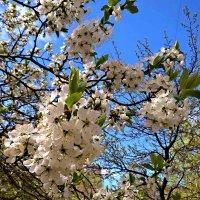 Когда придет весна.. :: Елена Семигина