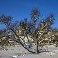 Спрятавшийся за деревом :: Сергей Цветков