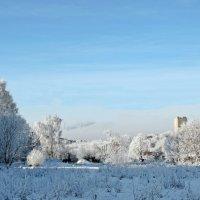 Снежное утро :: ivolga