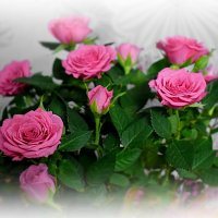 Цветочки юбиляру. :: A. SMIRNOV