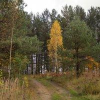 Золотая осень. Ярославская область :: Anton Сараев