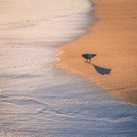 Птица на пляже :: Анна Удалова