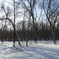Природа в январе... :: Тамара (st.tamara)