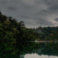 Где то в джунглях... Таиланда! :: Александр Вивчарик