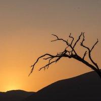 нежность дерева Намиба (или по стилю Венеры Мило) :: Георгий А