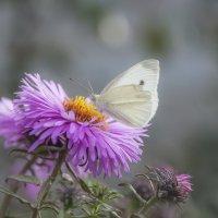 Вот-вот взмахну крыльями и улечу... :: Наталья Димова