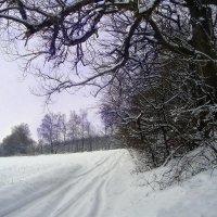 """""""Дорога біля лісу"""" :: Ростислав Кухарук"""