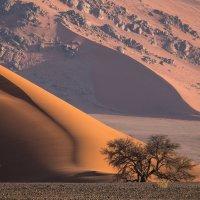 дерево на фоне дюн :: Георгий