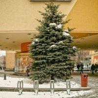 Ель. зима :: Павел Нарышкин